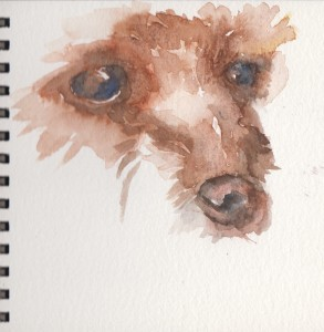 Dog features (Watercolour)