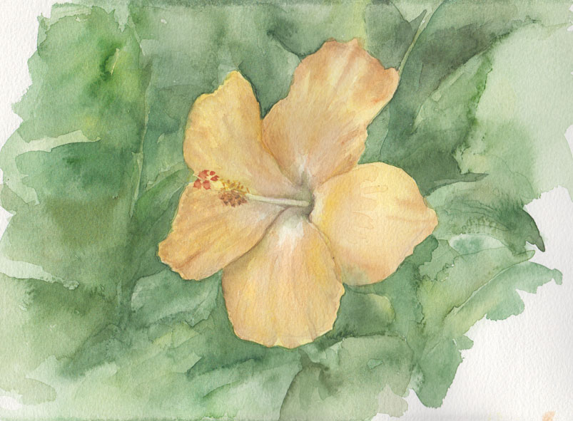 Yellow Hibiscus (Watercolour)