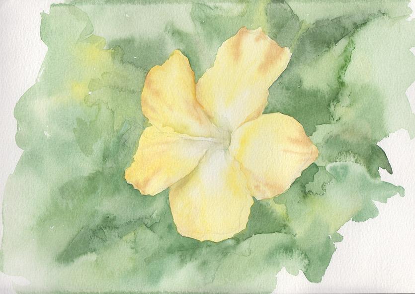 Yellow Hibiscus (Watercolour)