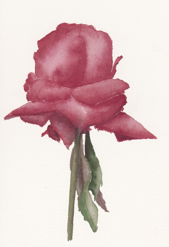 Red rose (Watercolour)