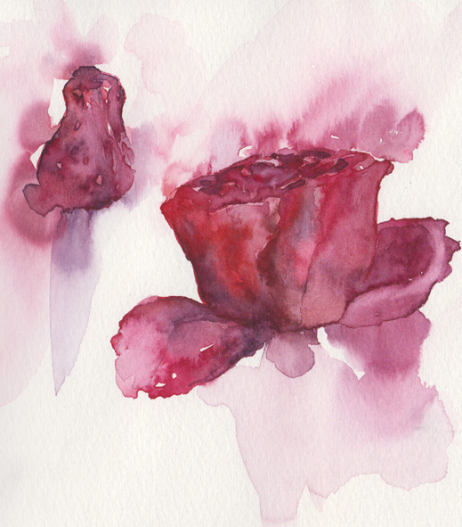 Roses (watercolour)