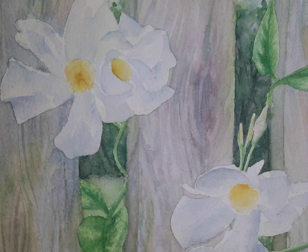 Peeking Through - White Thunbergia (Watercolour)