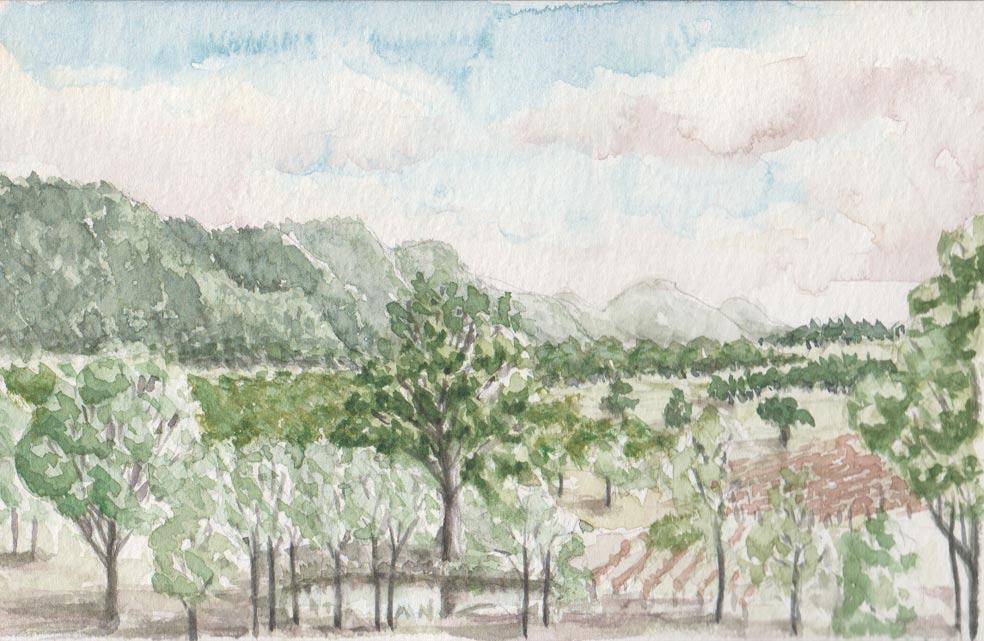 Hunter Valley Morning (Watercolour)