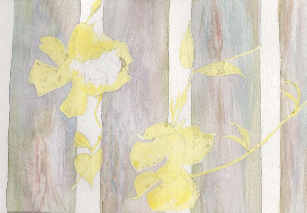 Peeping Through - White Thunbergia (Watercolour)