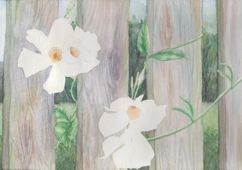 Peeking Through - White Thunbergia (Watercolour)