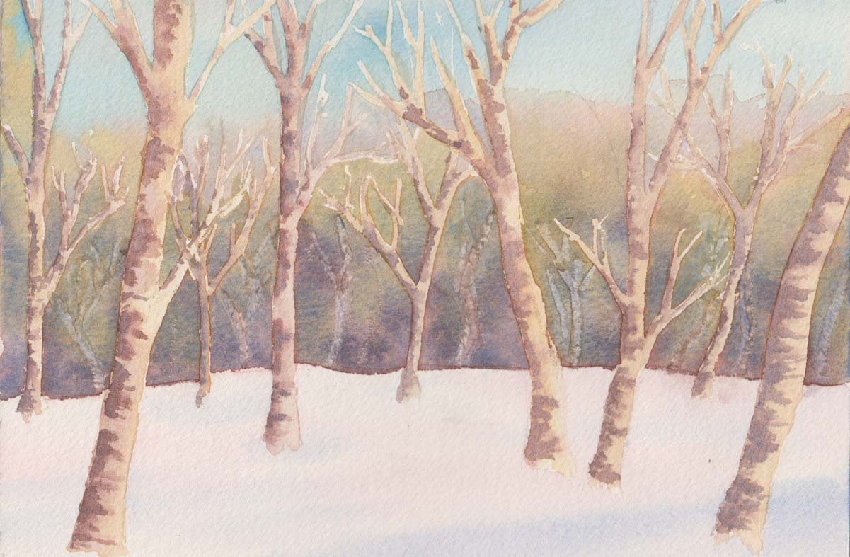 Silver Birch (Watercolour)