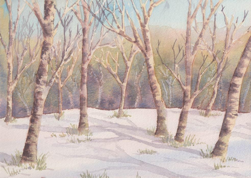 Silver Birches in Snow (Watercolour)