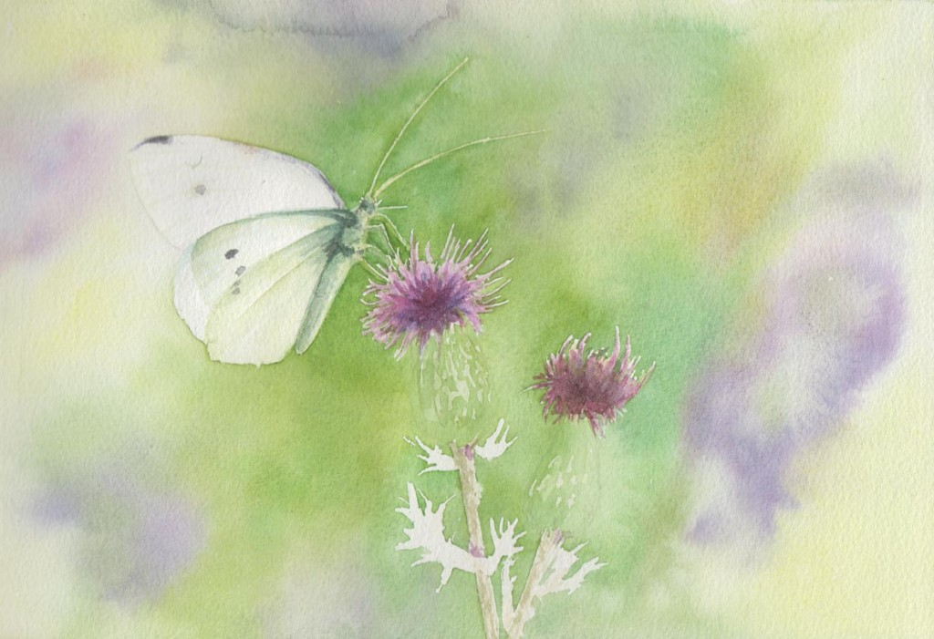 Butterfly & Thistle (Watercolour)