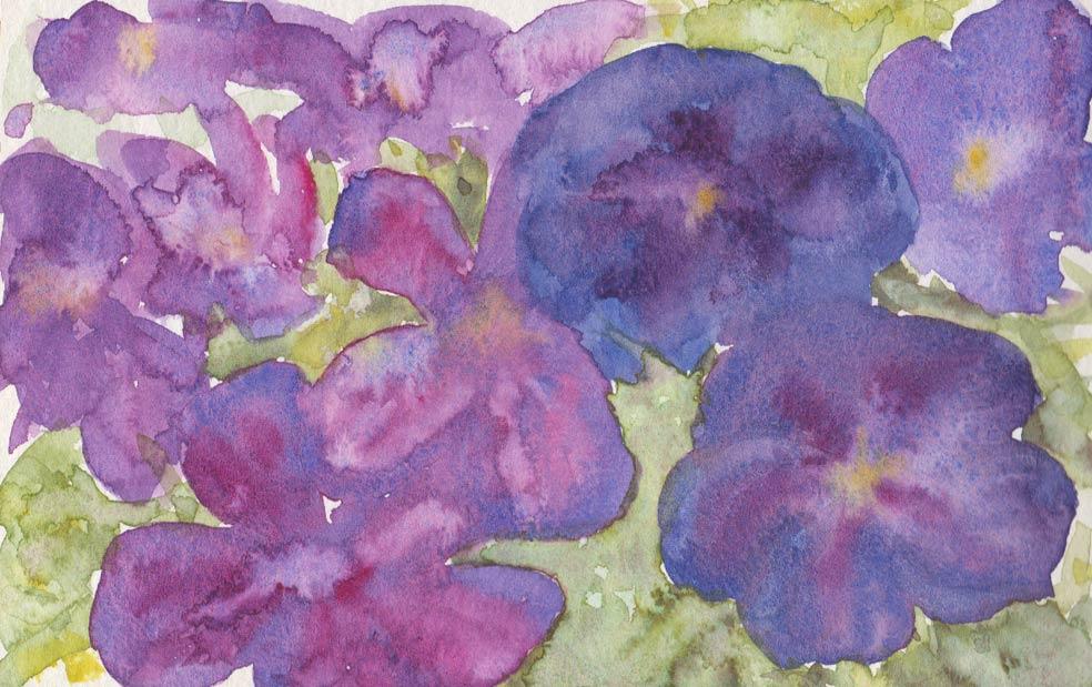 Tibouchina (Watercolour)