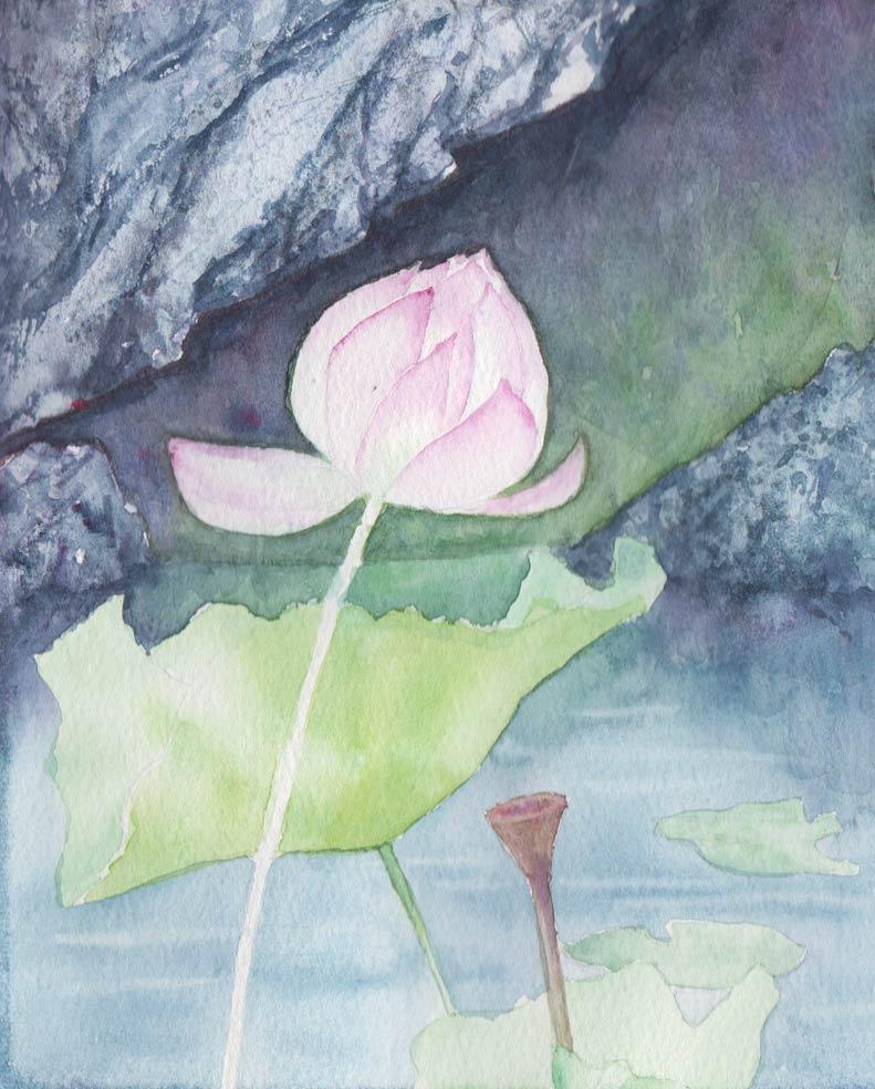 Lotus & Rocks (Watercolour)