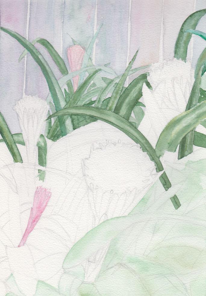 Bromeliads (Watercolour)