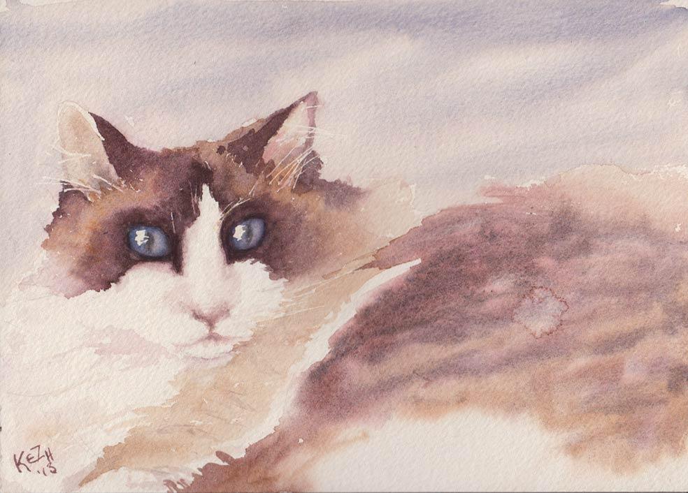 Blue Eyed Ragdoll Cat (Watercolour)