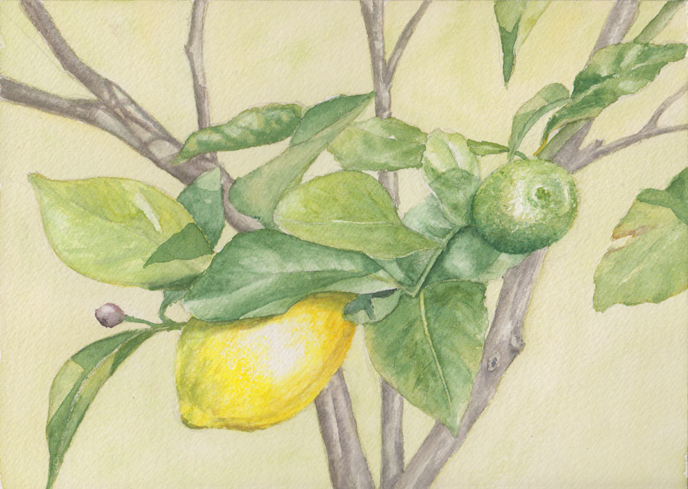 Lemons (Watercolour)