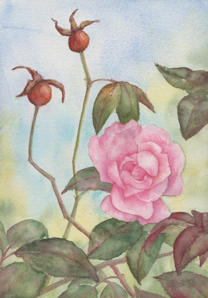 Last of the Roses (Watercolour)