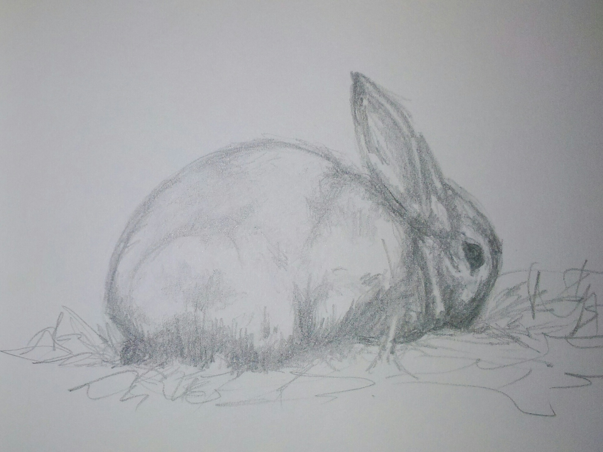 Bunny (Graphite Stick)