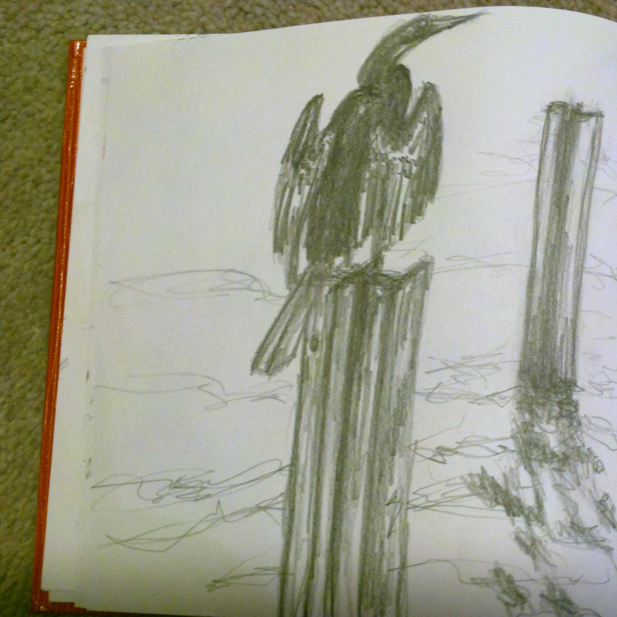 Cormorant (graphite)