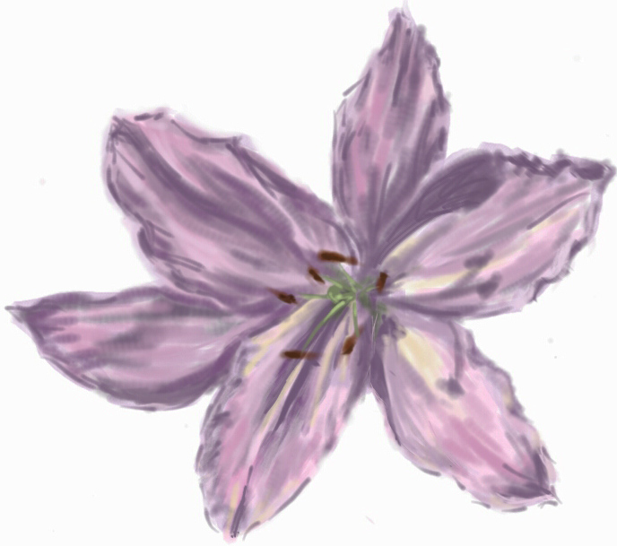 Oriental Lily (Digital Sketch)