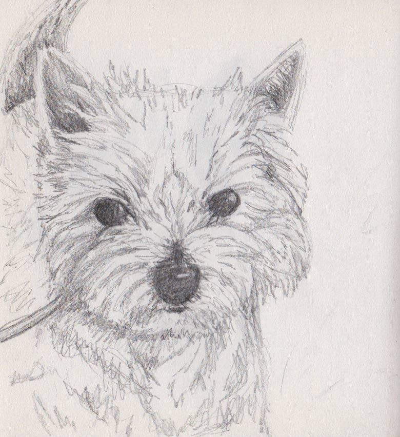 Molly Moo (Pencil)