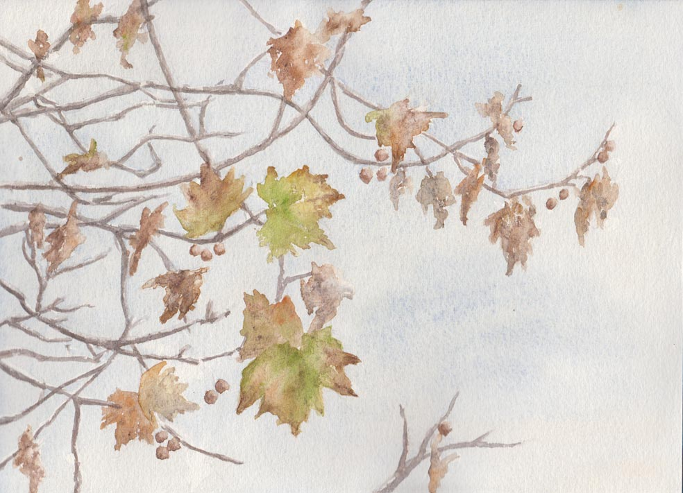 Wintery Sycamore Leaves (Watercolour)