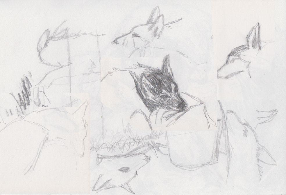 Dog Scribble (pencil)