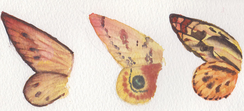 Butterfly Wings (Watercolour)