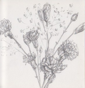 Carnations (graphite)