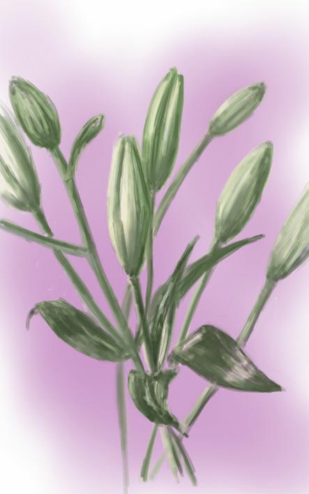 Lilies (Digital Sketch)