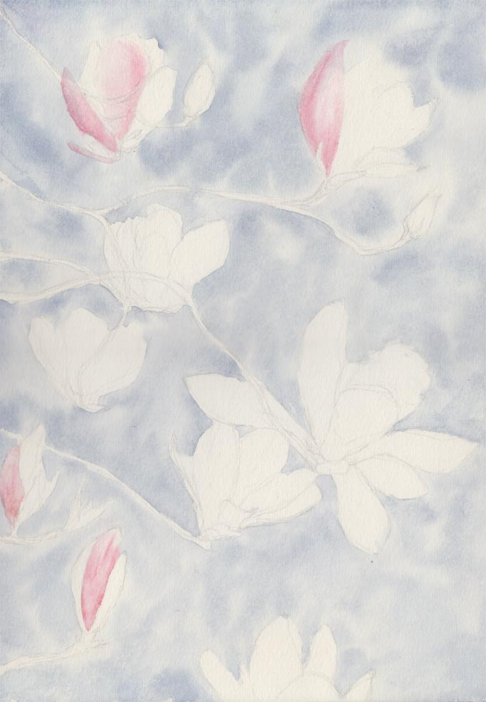 Magnolia Blossom (Watercolour)