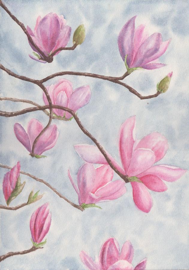 Magnolia Blossom (Watercolour)