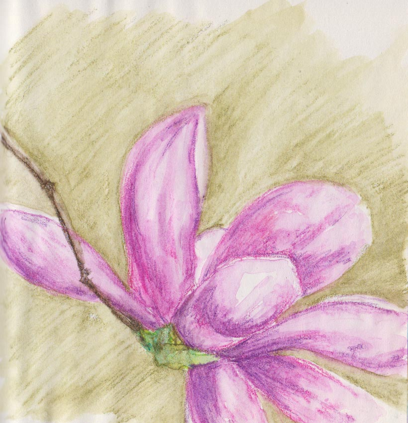 Single Magnolia (Watercolour Crayon)
