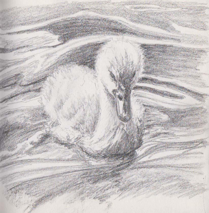 Baby Swan (Graphite)