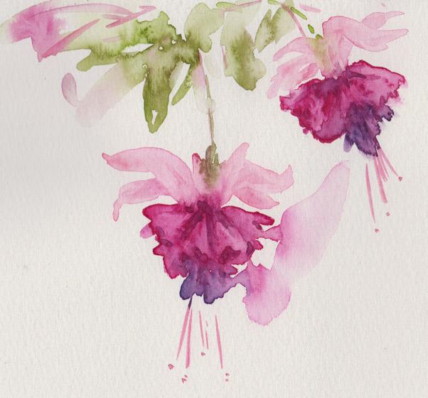 Fuchsia Sketch (Watercolour)