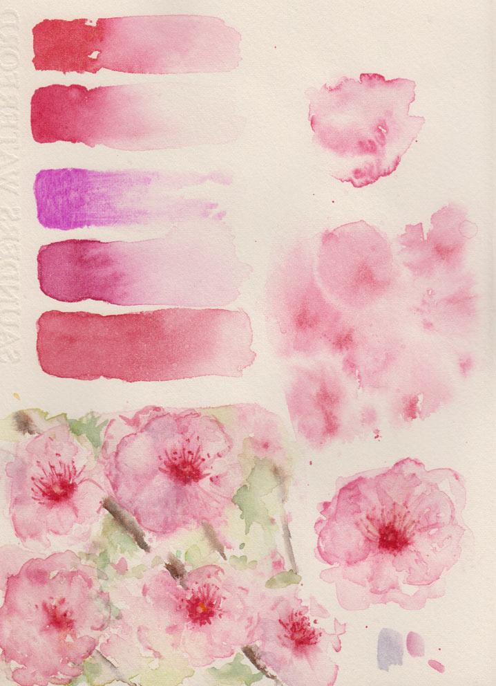 Plum Blossom (Watercolour)