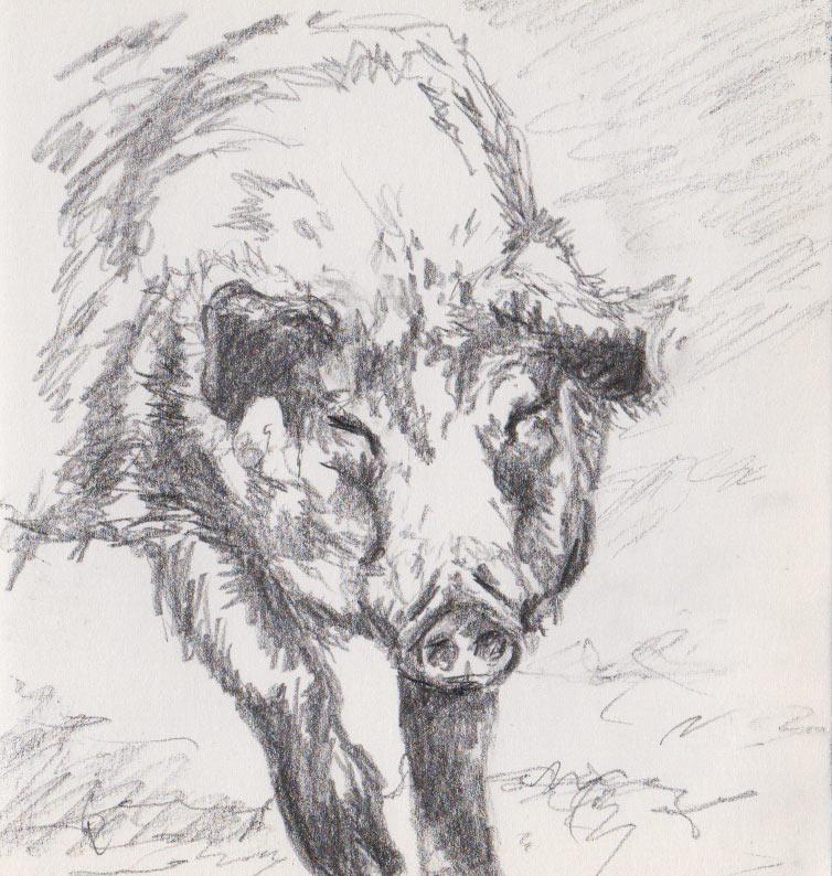 Hairy Boar (graphite)