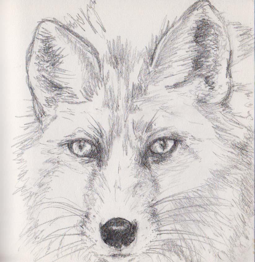 Fox (graphite)