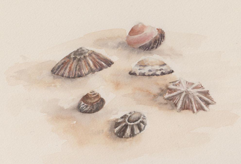 Sea Shells (Watercolour)