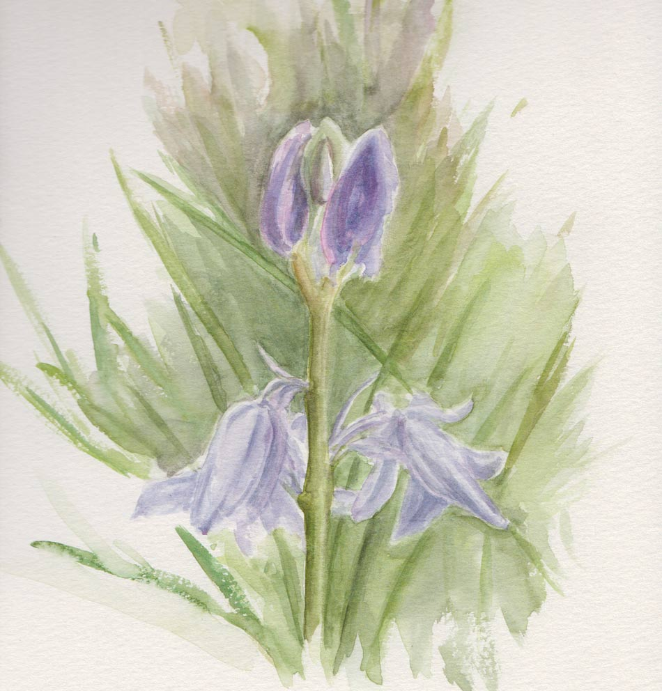 Bluebells (Watercolour)