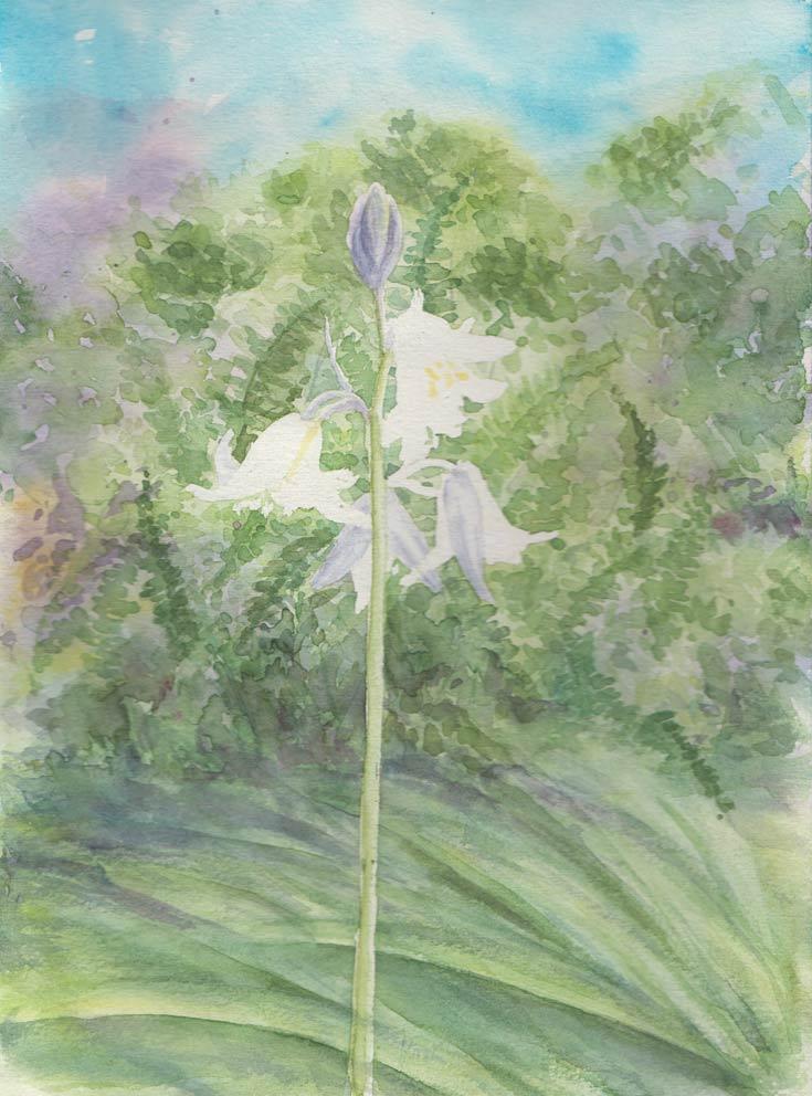 Bluebells (Watercolour)