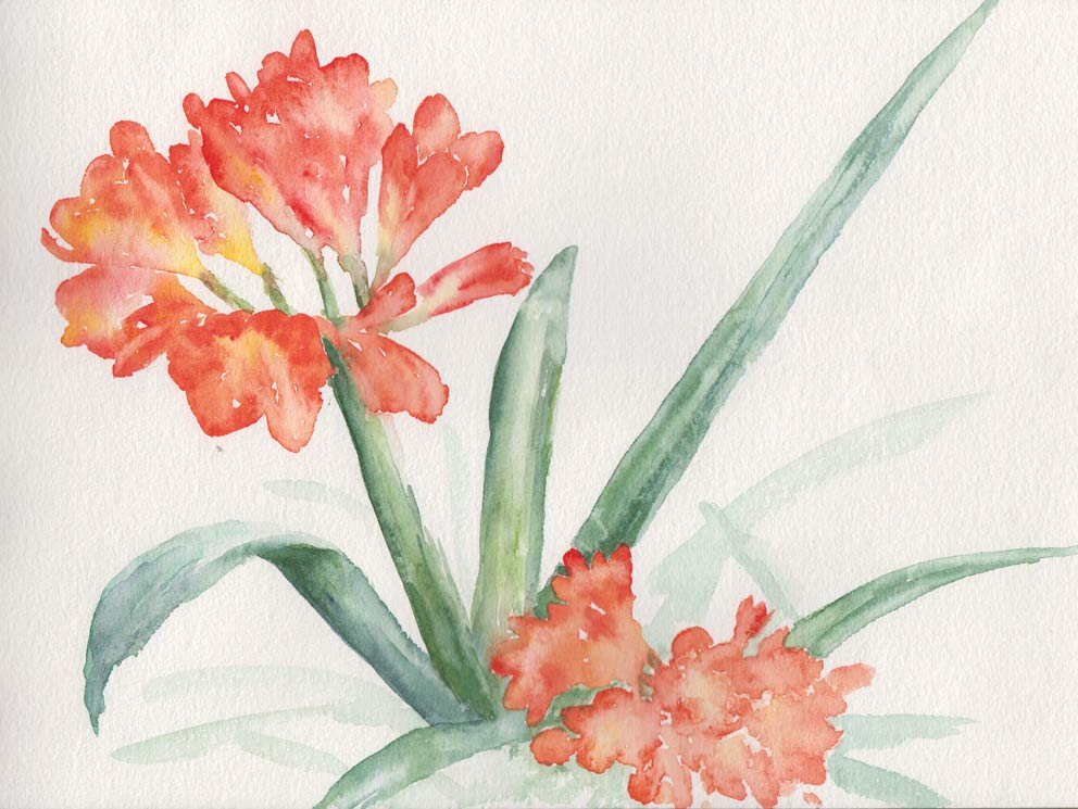 Kaffir Lily (Watercolour)