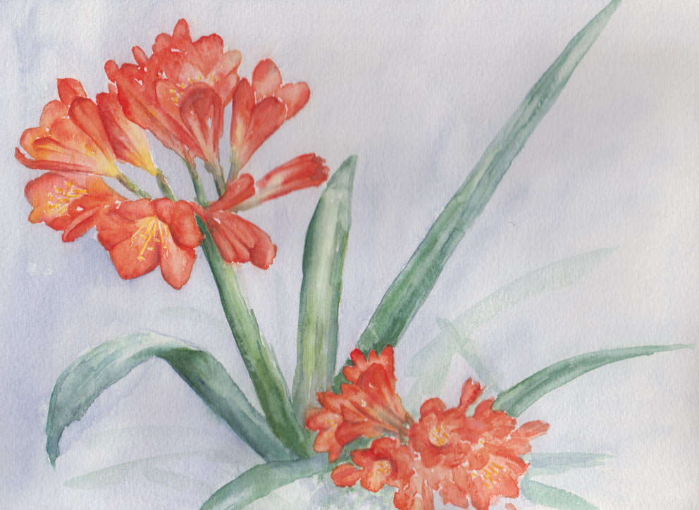 Clivia Miniata (Watercolour)