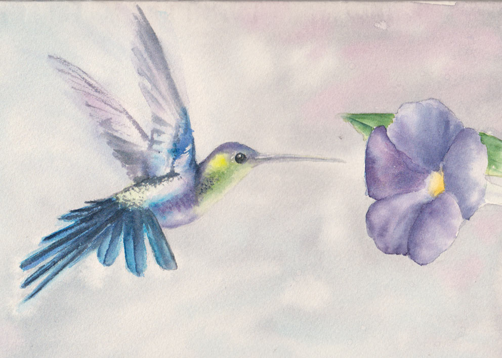 Hummingbird (Watercolour)