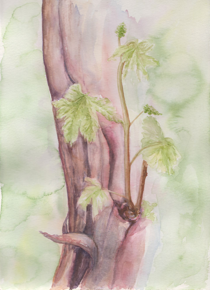 New Shoots (Watercolour)