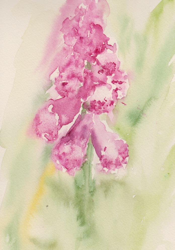 Foxgloves (Watercolour)