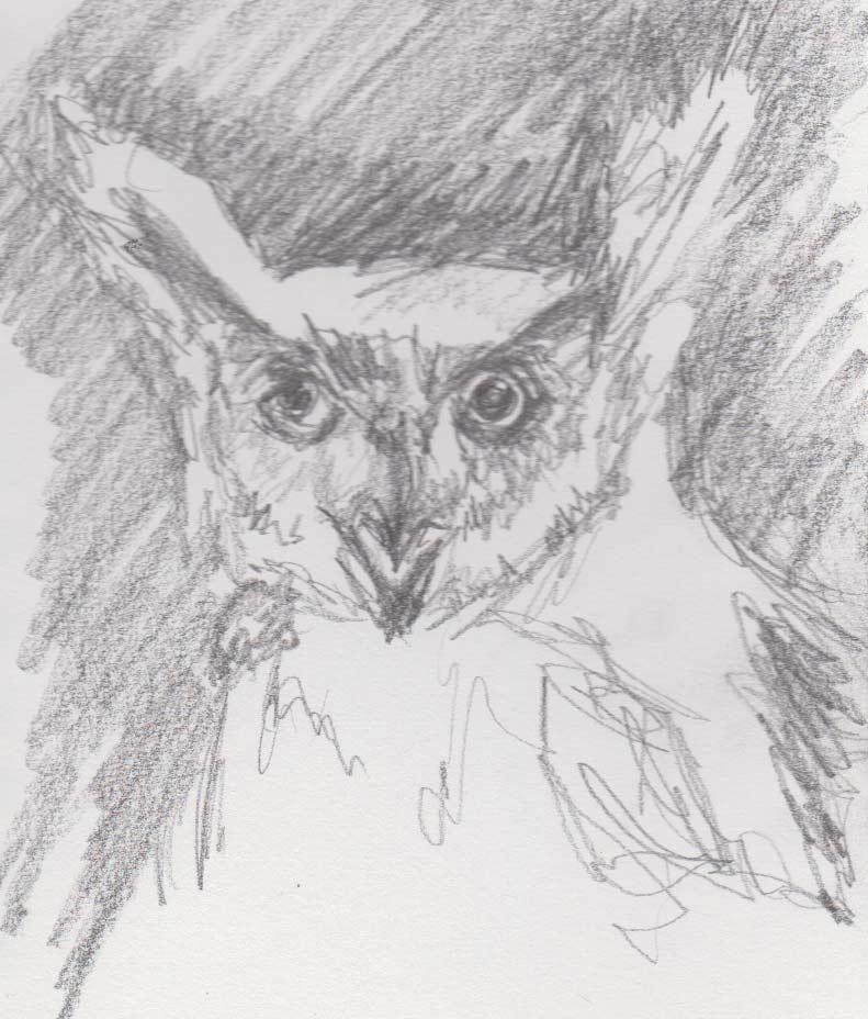 Horned Owl (Graphite)