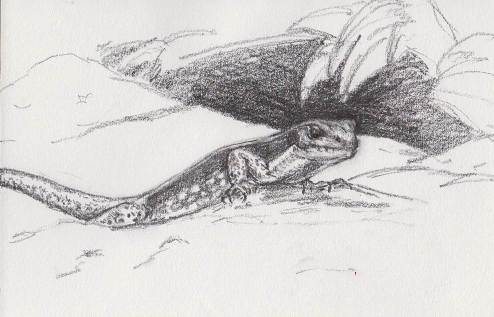 Fearless Skink (Graphite)