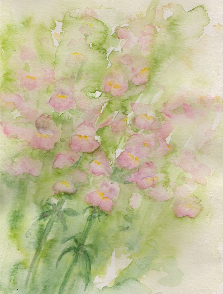 Snapdragons (Watercolour)