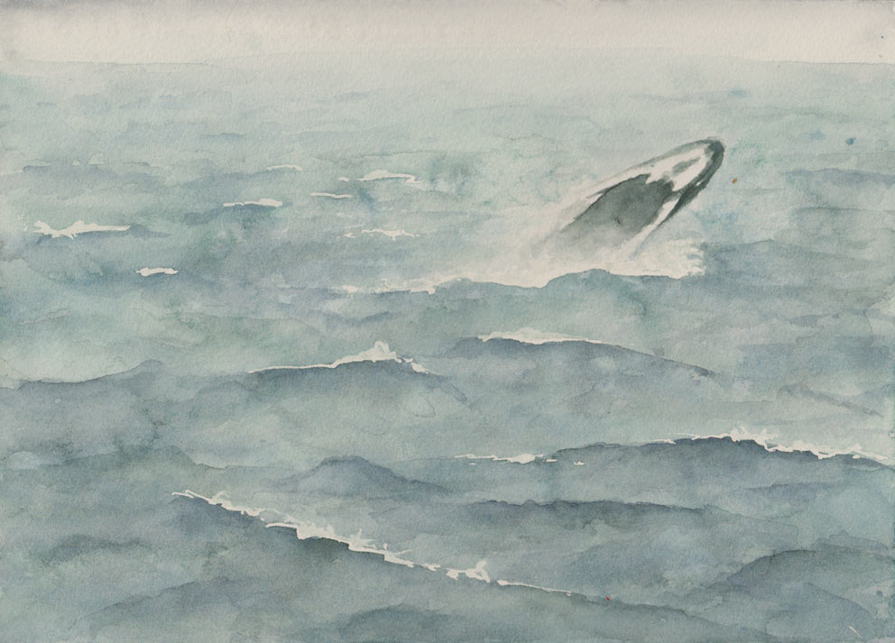 Humpback Whale (Watercolour)