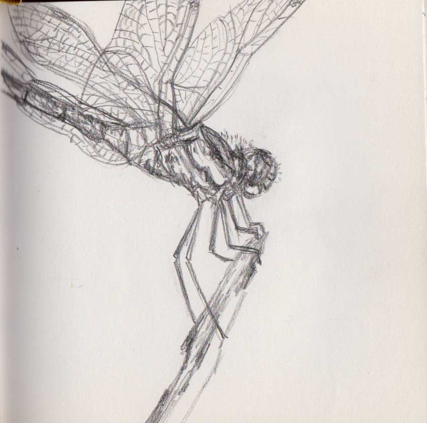 Dragonfly (Graphite)