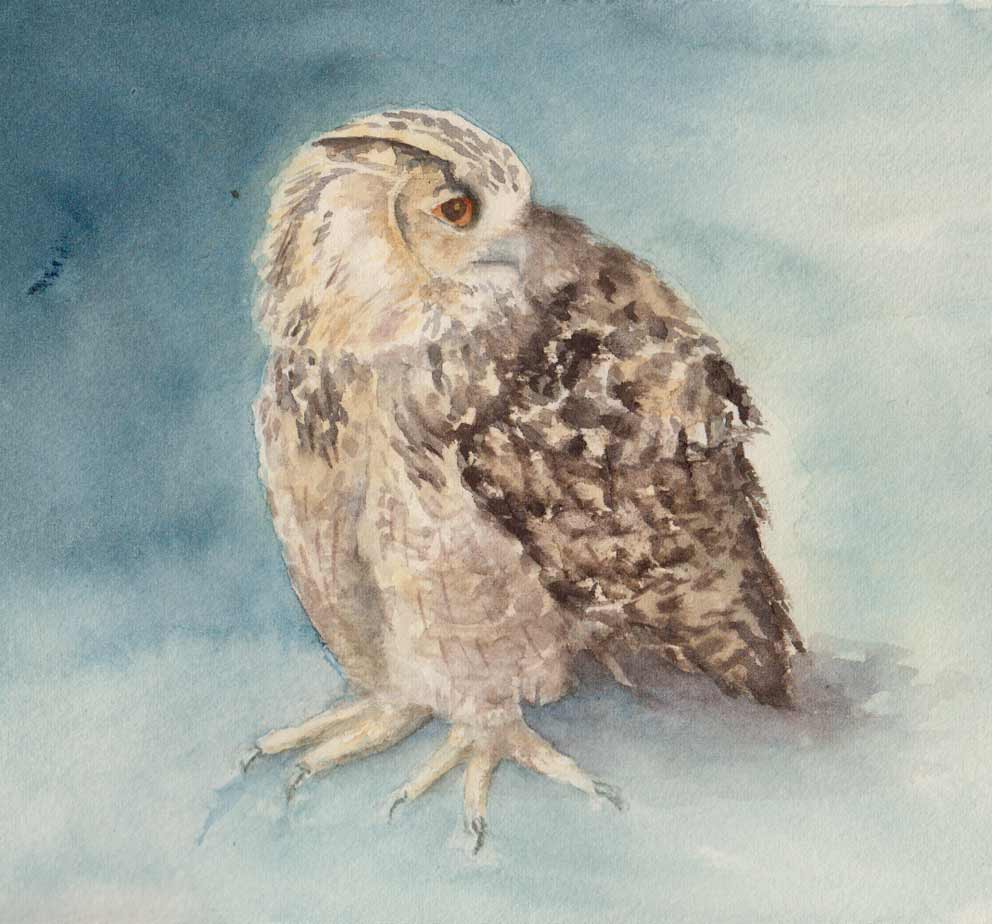 Turkmenian Eagle Owl (Watercolour)