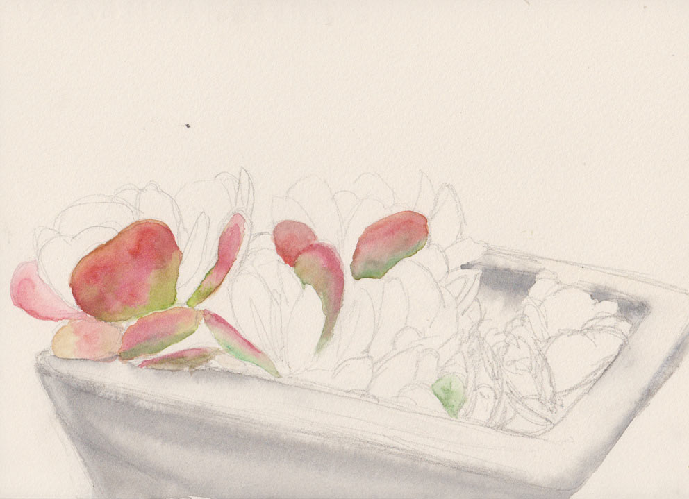Paddle Plant (Watercolour)